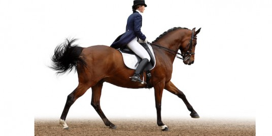 dressage featured