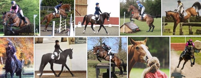 Horses For Sale And Loan In Dumfries And Galloway