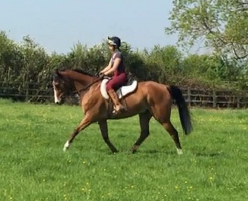 ROR Winner 2018, Impressive Mover, Dressage / Showing
