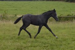 Horses for sale and loan UK - Right Horse Right Home