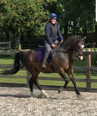 Dressage Horse for Loan