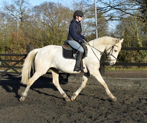 Palomino mare with huge potential