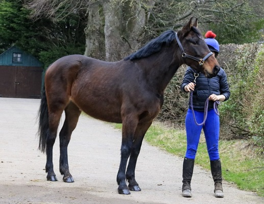 ISH – Superb Eventing / Jumping Pedigree / Prospect