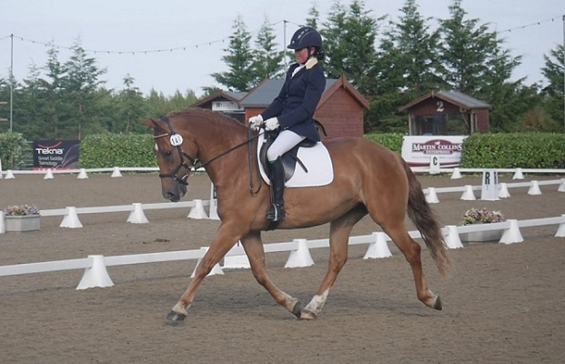 Bold and scopey jump, competing Novice Dressage