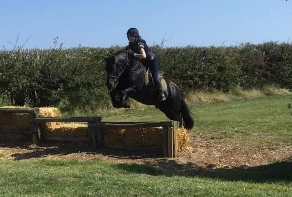Sensible, Confidence Giving Fell Pony for Sale