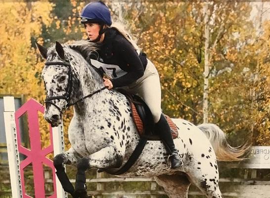 Super talented SJ/XC Horse