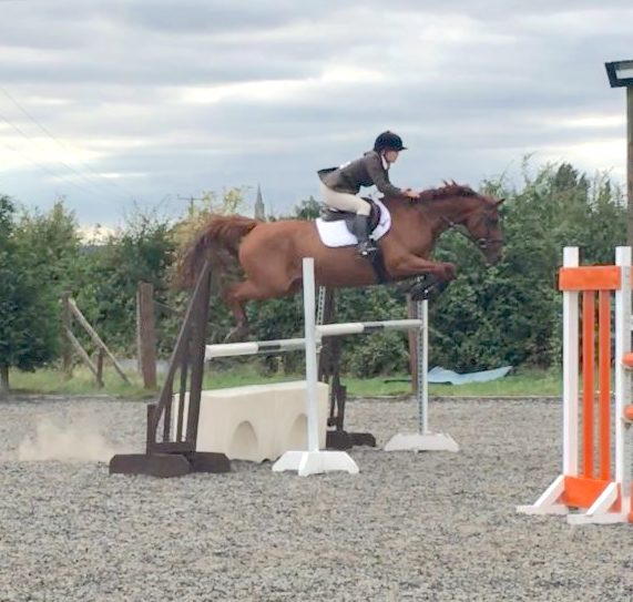Super Fun 16hh Irish Sports Horse