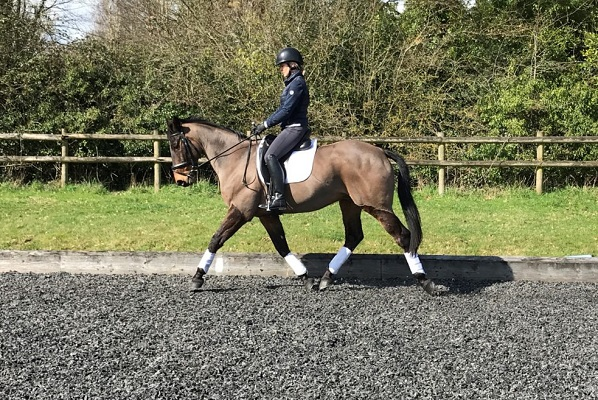 Smart Looking and Genuine – Dressage/RC/Hacking