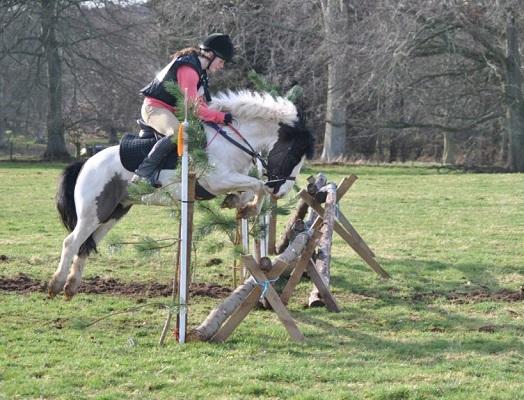 Shetland x cob ex riding school pony
