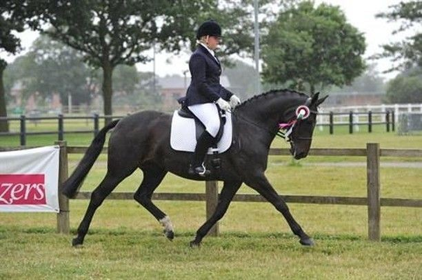 This Gorgeous Mare – a Dream in Every Way