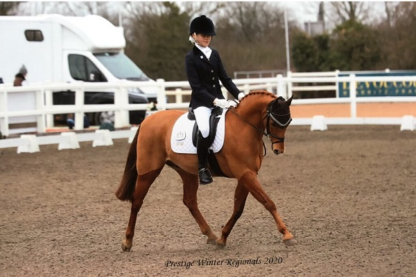 Outstanding Show/Dressage pony
