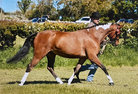Super Lead Rein / Child's Pony