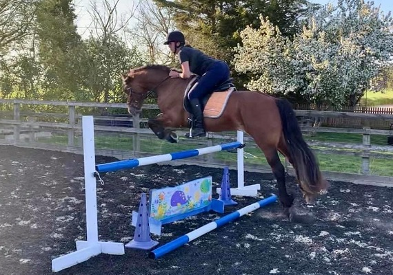 Smart 5year old Welsh D