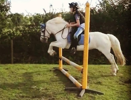PC all rounder mare/ lead rein/ 2nd pony for loan
