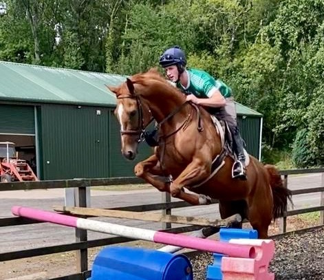 Quality Chestnut Mare
