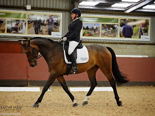 Stunning Sport Horse for Dressage / Hack / Riding Club