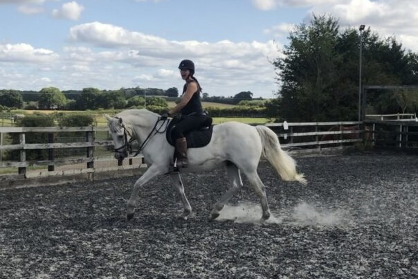 Veteran Gelding for share/loan in Berkshire