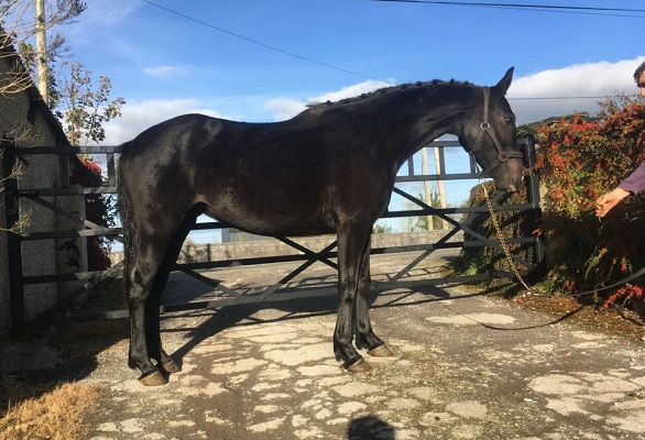 Gorgeous 3yo mare by Watervalley Cool Diamond