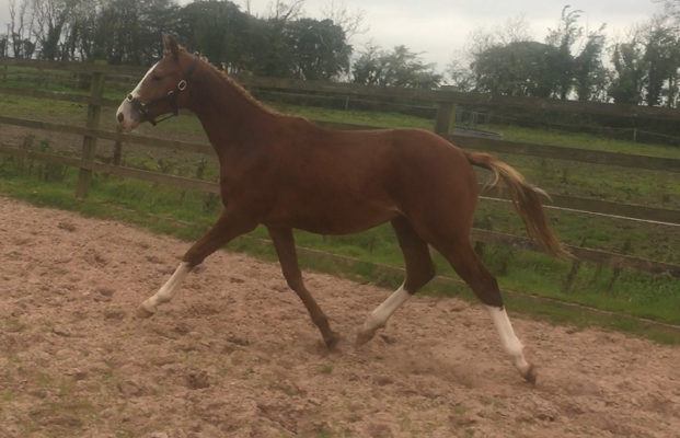Top Event Bred Yearling