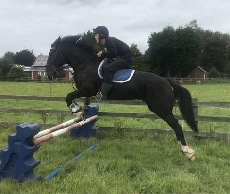 Black Beauty Jumping Mare