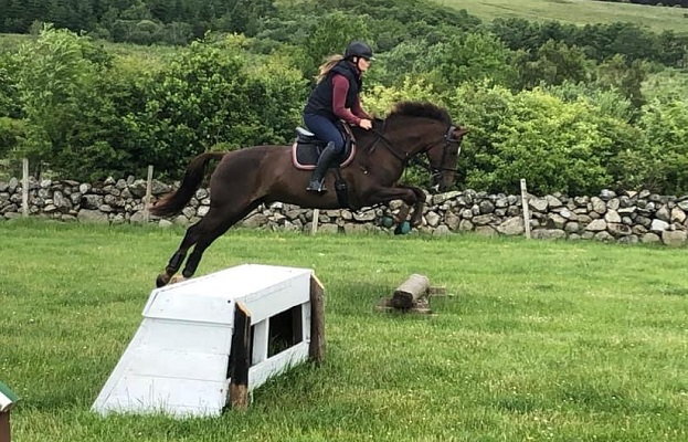 Talented Irish Sports Horse