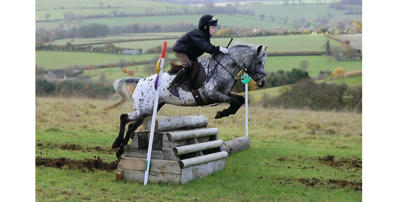 Perfect SJ or Mounted Games Pony