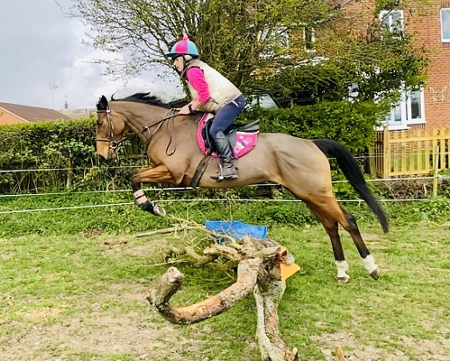 Gorgeous Allrounder Mare