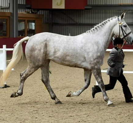Beautiful ID mare