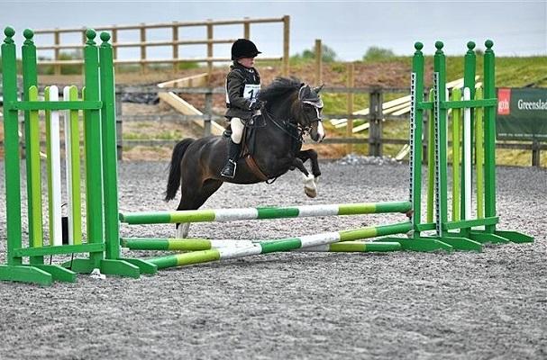 All-Round Capable Child's Pony