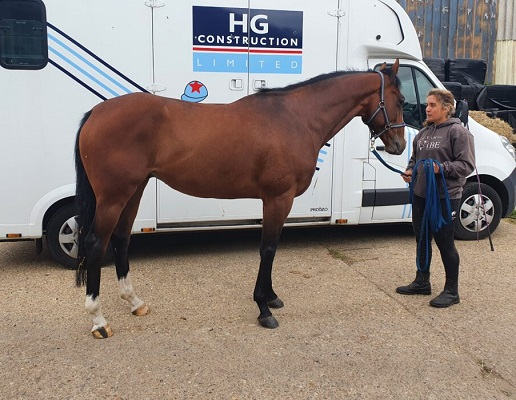 Ex Racehorse Project