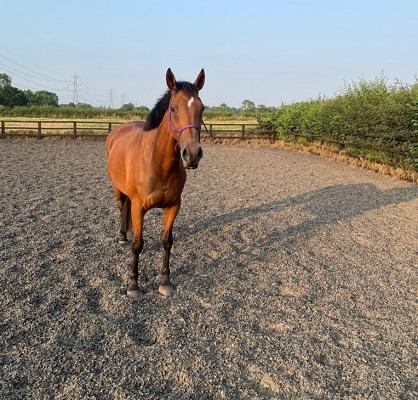 Light Hack / Light Schooling Horse