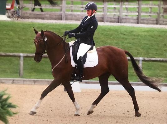 Super Dressage Horse for LWVTB, Full Loan or Sale