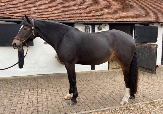 Smart Loan horse