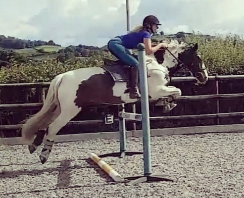 Beautiful Allrounder for sale